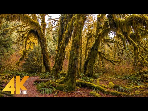 Most Beautiful Places in America - 4K Amazing Nature | 6 HOURS - Episode #4