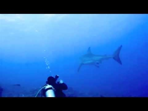 Great White Shark - Molokini Maui Hawaii