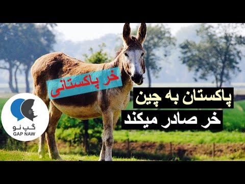 پاكستان به چین خر صادر میکند thumbnail