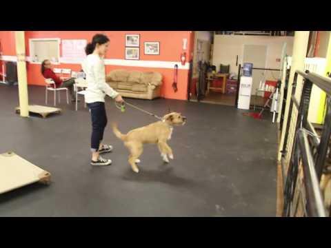 Training | Drop off session | Solid K9 Training Dog Training