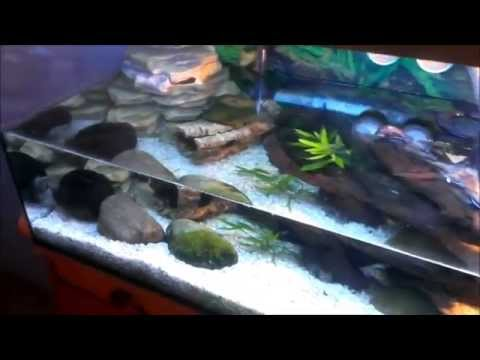 moschusschildkr ten im neuen aquarium youtube. Black Bedroom Furniture Sets. Home Design Ideas