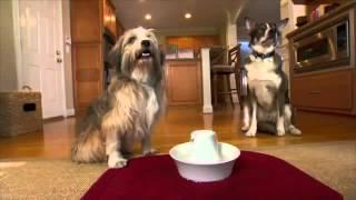 PetSafe® New Porcelain Fountains
