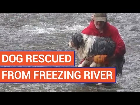 Amazing Man Rescues Dog From Freezing Water Video 2017 | Daily Heart Beat
