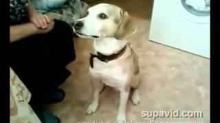 Танцующая собака (смотреть до конца)