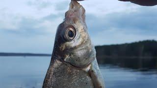 Весенняя рыбалка 2021 в запрет и подготовка базы открытию часть 2