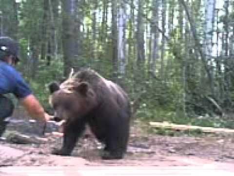 Что едят Медведи - Чем питаются животные