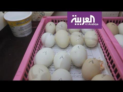 #صباح_العربية: تناول قشر البيض لعظام قوية  - نشر قبل 28 دقيقة