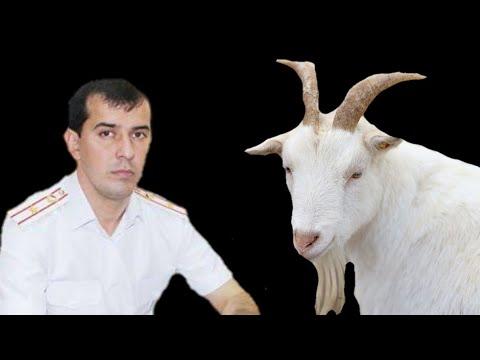Позор начальника уголовного розыска Таджикистана