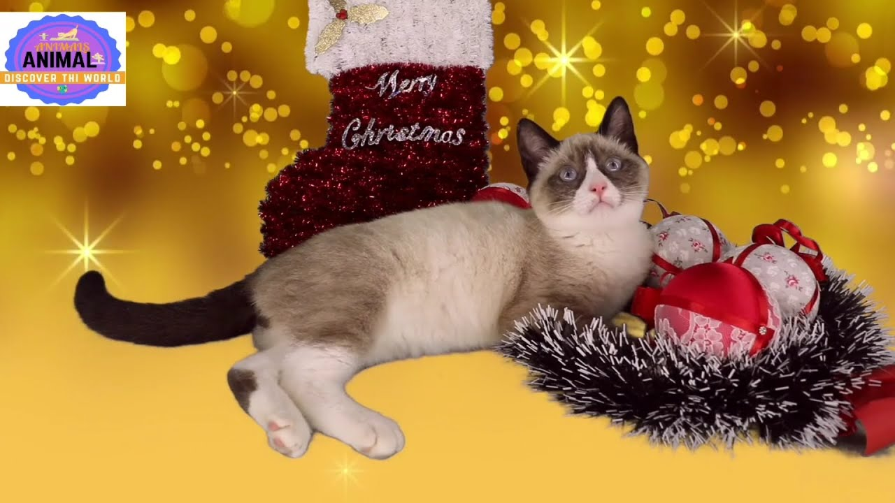 Download #AnimalsDiscoverTheWorld  Cats  Funniest Creatures in Animals Kingdom Funny Cat Compilation Videos |