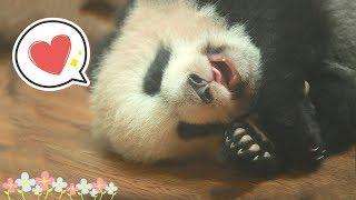 【Panda Theme】On World Sleeping Day, Let Pandas Teach You How To Sleep | iPanda