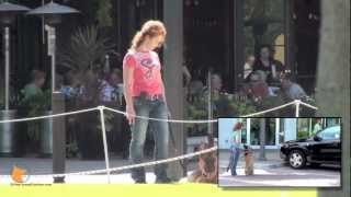 Naples, Fl Real-life Dog Training And Proper Socialization In Public Places