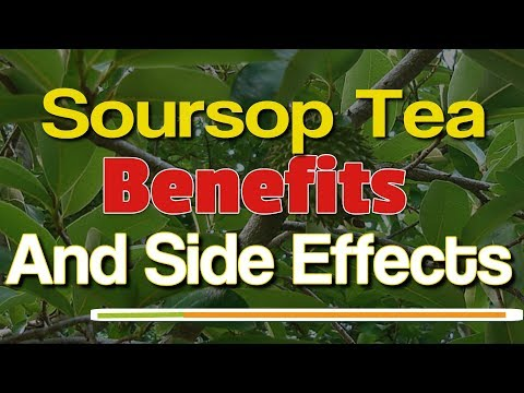Soursop Tea Benefits And Side Effects