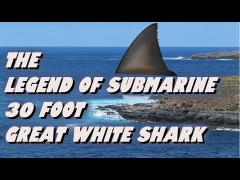 The Legend Of Submarine    30 Foot Great White Shark