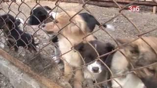 Бездомных собак Читы отправили в исправительную колонию