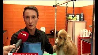 Як опікуються тваринами у Європі