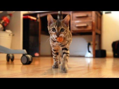 My Kitten Playing Fetch