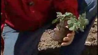 Jim Zamzows Gardening Tip # 7