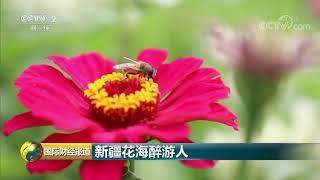 [国际财经报道]新疆花海醉游人| CCTV财经