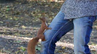 Funny friendly hungry squirrels / śmieszne wiewiórki