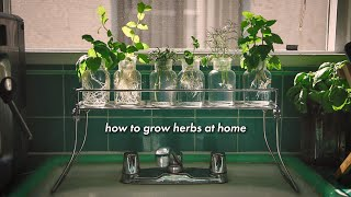 how to grow heŗbs at home without soil 🌿