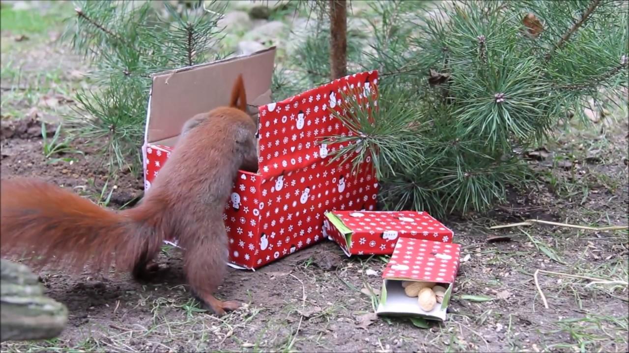 Weihnachten bei den Eichhörnchen im Wildpark-MV - YouTube