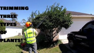 Tree Trimming & Hedge/Shrub Clean-Up - Time Lapse