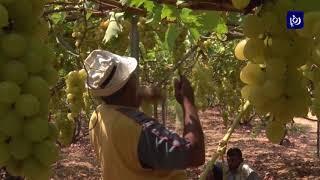 سوء الأوضاع الاقتصادية في غزة تفرض تحديات على القطاع الزراعي - (26-8-2017)
