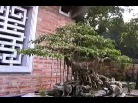 Vietbonsai - Triển lãm APEC