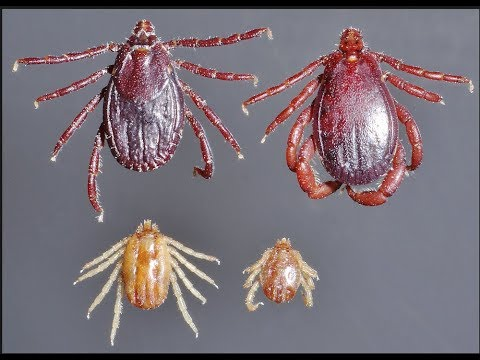 Weaponized Insects Escaped, House Demands Pentagon Release Intel