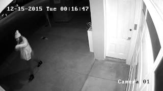 Plant Thieves in Potrero Hill - do you know them?