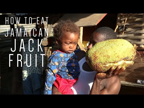 How to eat Jamaican Jackfruit (with Ratty)