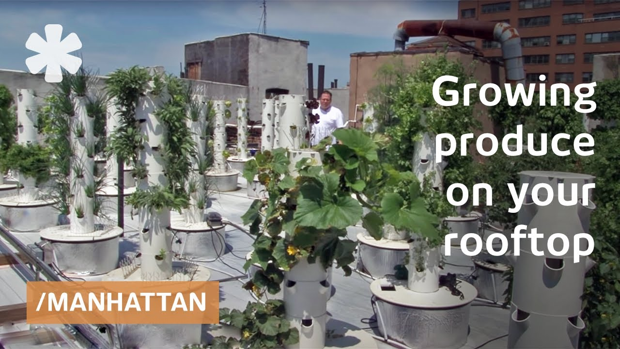 Soil Less Sky Farming Rooftop Hydroponics On Nyc
