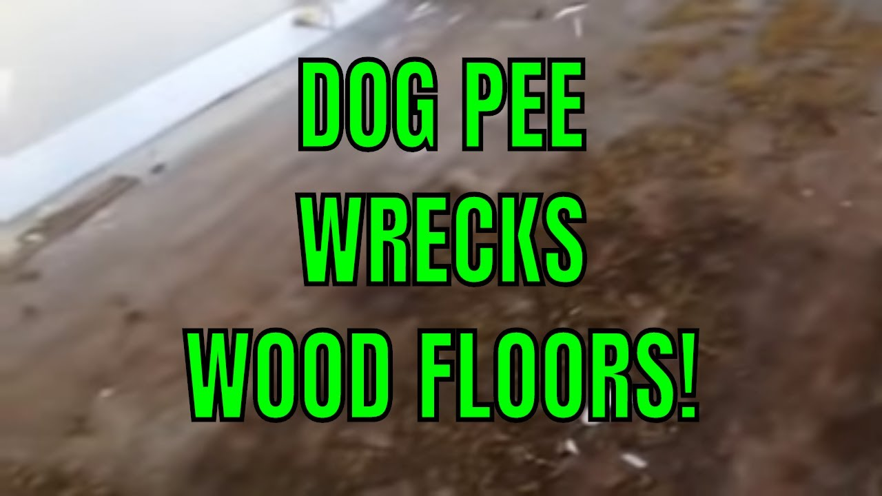 Dog Pee Wrecks Wood Floors I Learned Youtube