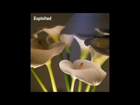 Download Yarni & Javi - Sakura (Original Mix) [Exploited]