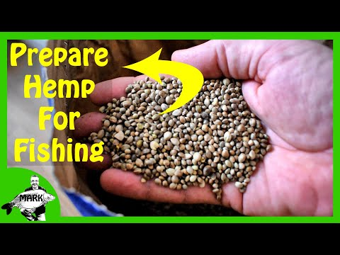 Preparing Hemp Seed For Fishing - WITH A THERMOS FLASK