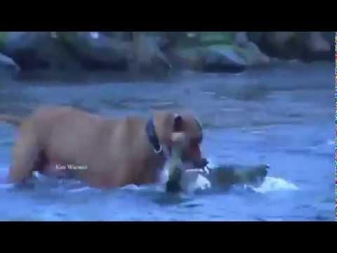 паляуничы и рыболов
