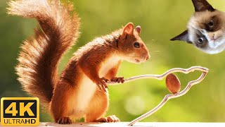 Squirrels for Cats and Dogs to Watch  4 hours 4k     No Ads!