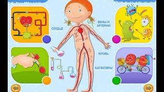 Обзор интерактивной энциклопедии о теле человека для детей в приложении Азбукварик