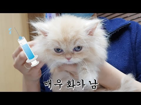 a baby cat that cries bitterly after being injected