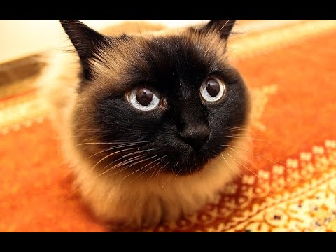 Кошка шипела и дралась, кто ж знал, что наш кот её так изменит! Все были в шоке!