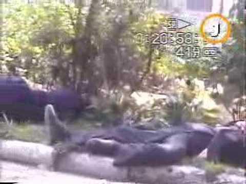 North Korea--News from South Korean TV