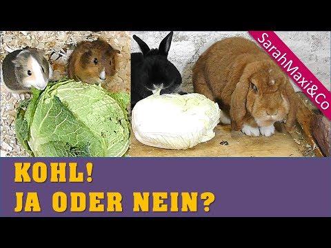 d rfen kaninchen meerschweinchen kohl fressen ern hrung artgerecht youtube. Black Bedroom Furniture Sets. Home Design Ideas