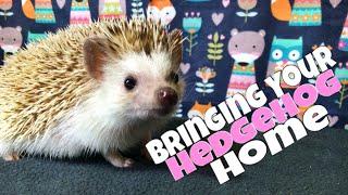 Hedgehog Care: Bringing Your Hedgehog Home (feat. Draco)