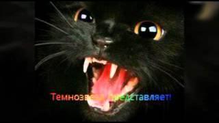 Коты - воители. Бич и Огнезвёзд!