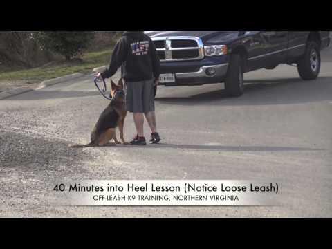 German Shepherd Before/After Heel Lesson!  German Shepherd Training, Northern Virginia