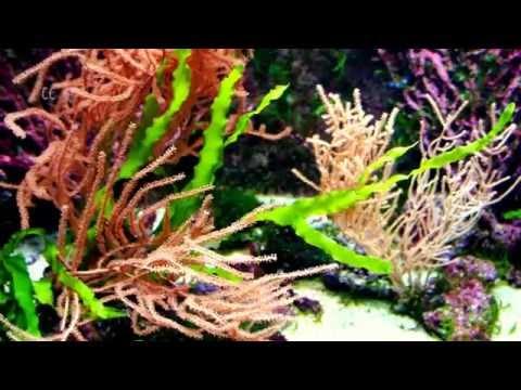 Relaxing Algae Garden in Sea Water