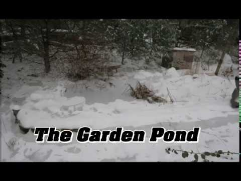 Time Lapse Photography - The Garden Pond