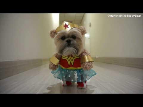 Munchkin Wonder Woman Halloween