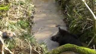 abois dans un ruisseau 2