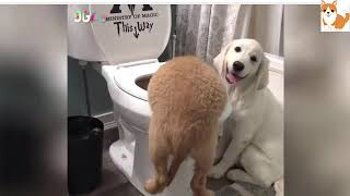 cutest animals compilation funny pets videos 2018